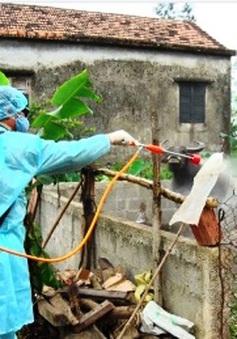 Bùng phát dịch lở mồm long móng tại Ninh Thuận