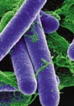 Các liệu pháp thay thế thuốc kháng sinh