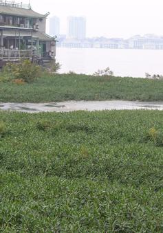 Hà Nội tiến hành nạo vét, cải tạo lòng Hồ Tây