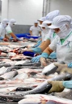 """Cá tra Việt """"đổ bộ"""" mạnh vào thị trường Thái Lan"""