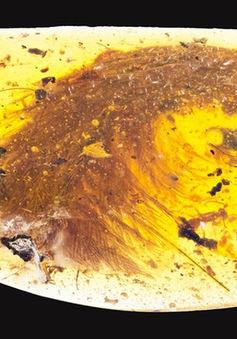 Phát hiện đuôi khủng long 99 triệu năm trước trong viên hổ phách