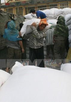 Chính phủ chỉ đạo hỗ trợ gạo cho Thanh Hóa và Ninh Thuận
