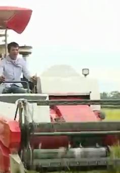 Quảng Bình thu hoạch vụ Hè Thu trước mùa mưa bão