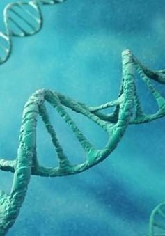 Phát minh liệu pháp gen để chữa bệnh mất trí nhớ