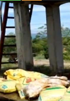 Vứt xác gia cầm bệnh xuống mương tại Quảng Ngãi
