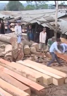 Đăk Nông đình chỉ công tác 4 cán bộ kiểm lâm trong vụ DN cất giấu gỗ lậu