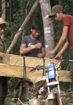 Thủ tướng yêu cầu làm rõ vụ phá rừng ở Kon Tum