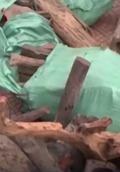 Hà Tĩnh: Bắt giữ 9 bao tải gỗ Trắc không có giấy tờ hợp lệ