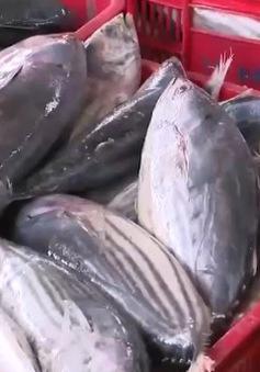 """Truy xuất nguồn gốc - Gỡ """"nút thắt"""" hải sản tồn kho"""