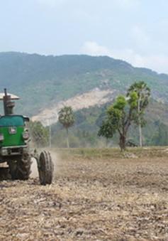 ĐBSCL: Hơn 100.000ha lúa bị ảnh hưởng nghiêm trọng bởi hạn, mặn