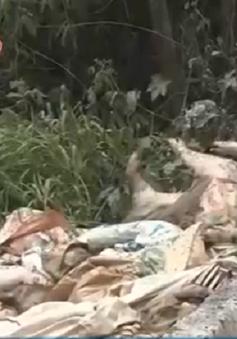 Hàng trăm con lợn phân hủy gây ô nhiễm sông Sài Gòn