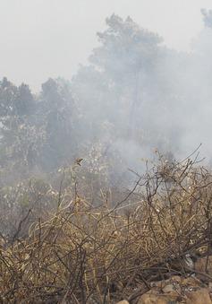 Cơ bản khống chế được đám cháy tại rừng Nam Hải Vân