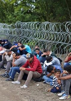 Châu Âu họp bàn cách cứu Khu vực Schengen khỏi nguy cơ sụp đổ