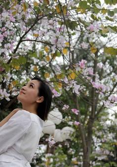 Giới trẻ Hà thành háo hức chụp ảnh hoa ban