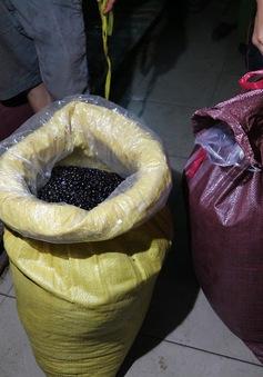 Bắt 0,5 tấn nguyên liệu chế biến cà phê giả tại Nha Trang