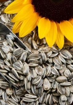 Những lưu ý khi mua hạt dưa, hạt hướng dương dịp Tết