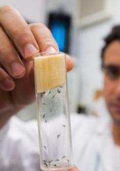 WHO ban hành hướng dẫn mới về phòng dịch Zika