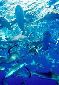 Những bãi biển nguy hiểm nhất hành tinh