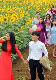 Hàng vạn du khách đổ về Ngày hội Hoa hướng dương Nghệ An