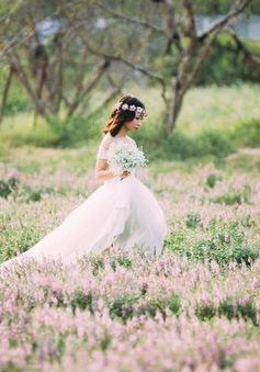 Café Sáng với VTV3: Ngất ngây với thảo nguyên hoa ngay giữa lòng Hà Nội