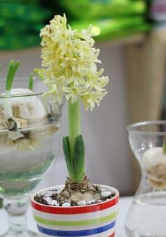 Đón Tết Bính Thân sớm với hoa lạ và cây cảnh tự trồng tại nhà