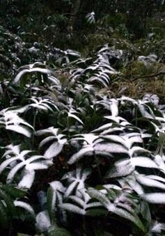 Ngắm cảnh băng tuyết phủ khắp Ba Vì - Hà Nội