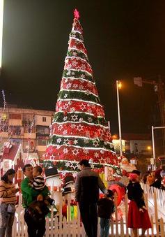 Mãn nhãn trước những cây thông Noel khổng lồ tại Hà Nội