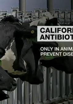 Quản lý sử dụng kháng sinh trong chăn nuôi - Ưu tiên hàng đầu trên thế giới
