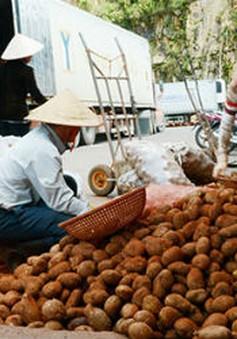 Mạo danh nông sản Đà Lạt: Tràn lan và dai dẳng!
