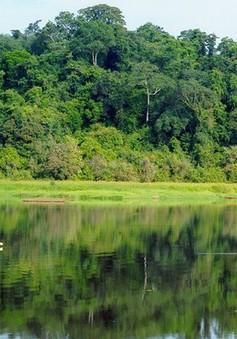Tạm dừng dự án làm đường trong vùng lõi Vườn quốc gia Cát Tiên