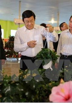 Chủ tịch nước khảo sát mô hình nông nghiệp cao tại Lâm Đồng