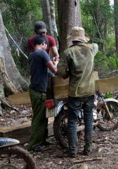 Bắt khẩn cấp lâm tặc đốt trạm quản lý bảo vệ rừng