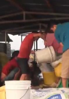 Tết bận rộn của người dân làng cá bè Đồng Nai