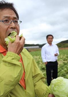 """Mô hình trồng rau sạch ở """"làng thần kỳ"""" Kawakami, Nhật Bản"""