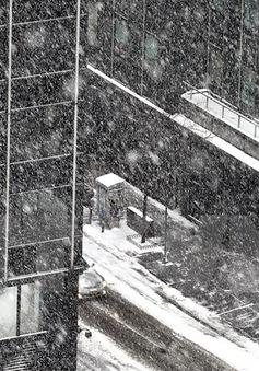 Hàng chục người chết do giá lạnh bất thường ở Ba Lan