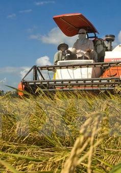 IFC hợp tác sản xuất lúa gạo bền vững tại Việt Nam
