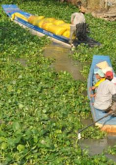Tây Ninh: Xử lý lục bình dày đặc trên sông Vàm Cỏ Đông
