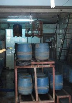 Phát hiện cơ sở trồng giá đỗ bằng hóa chất Trung Quốc tại TP.HCM