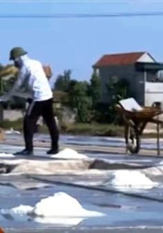 TP.HCM: Diêm dân đề xuất hỗ trợ vì giá muối quá thấp
