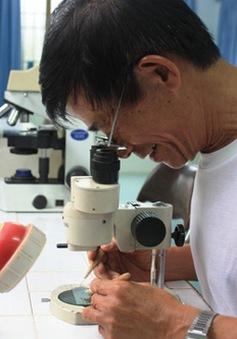 Sẽ mở rộng địa bàn thả muỗi mang Wolbachia tại TP Nha Trang
