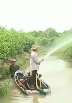 Nước ngọt về thượng nguồn đồng bằng sông Cửu Long