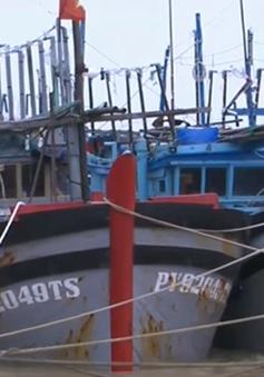 Tàu cá gặp nguy hiểm do triều cường, lũ dâng
