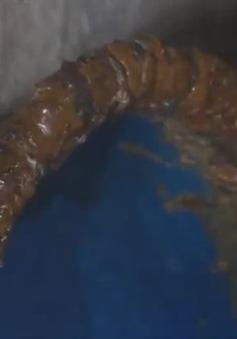 Làm sạch lông vịt bằng nhựa thông: Vẫn tái diễn dù đã bị xử phạt