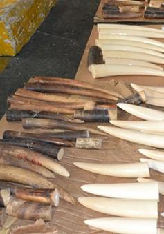 Nạn buôn bán động vật hoang dã vẫn nóng trong năm 2016