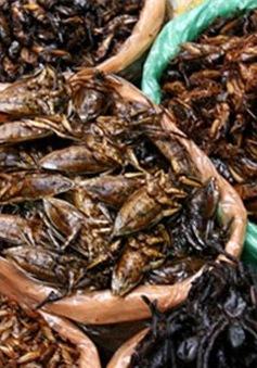 Nguy cơ ngộ độc do ăn côn trùng