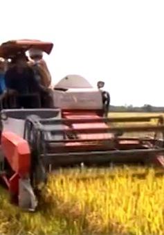 Bắt tay với doanh nghiệp, nông dân bớt lo đầu ra