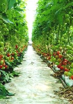 Cần tìm cách gỡ vốn cho nông nghiệp công nghệ cao