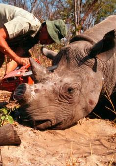 LHQ phát động chiến dịch chống buôn bán động vật hoang dã