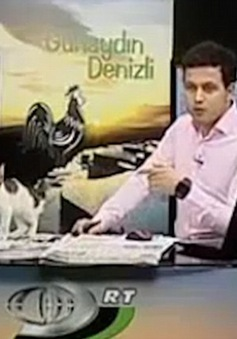 Bản tin truyền hình bị gián đoạn theo cách hài hước khó tin