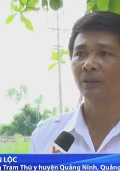 Xác lợn chết đầy đồng ở Quảng Bình: Hậu họa khôn lường
